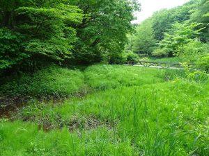草と川がきれいな景色